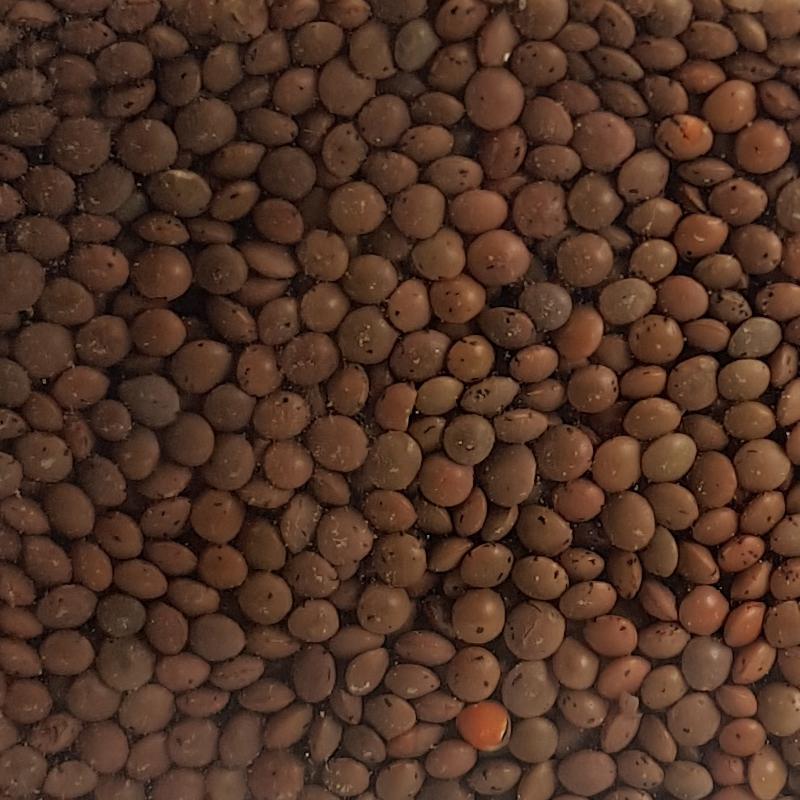 Braune Linsen 250g